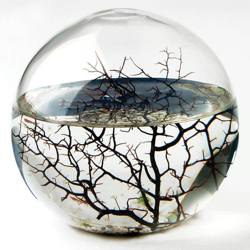 EcoSphere - Extra Large