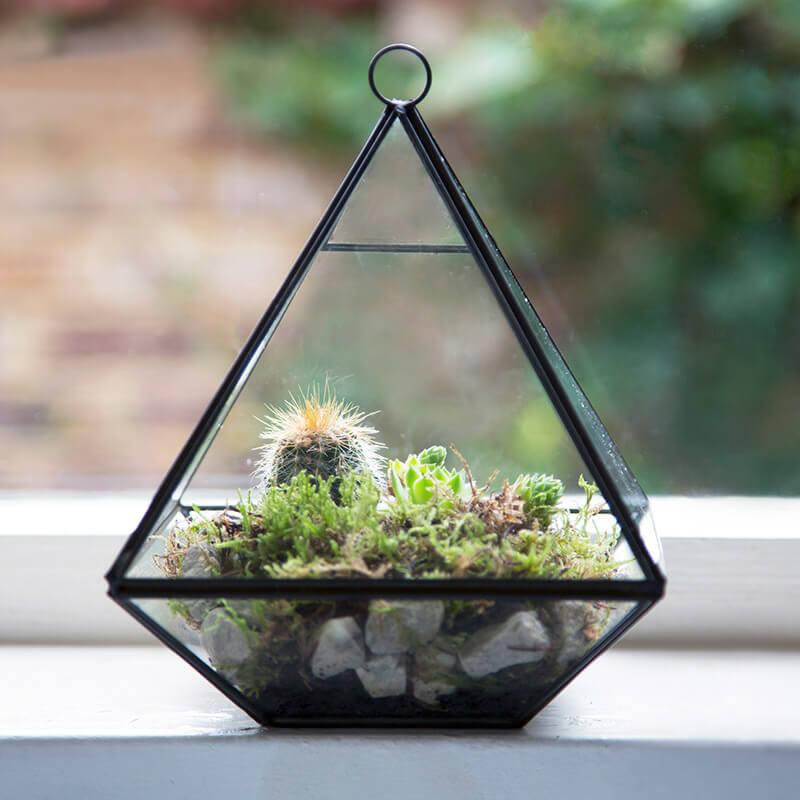 Pyramid Shape Terrarium