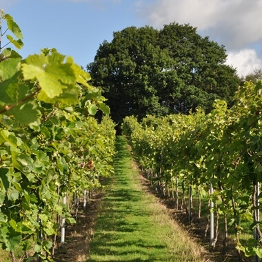 Vineyard Tour and Tasting with Lunch or Afternoon Tea for Two Special Offer