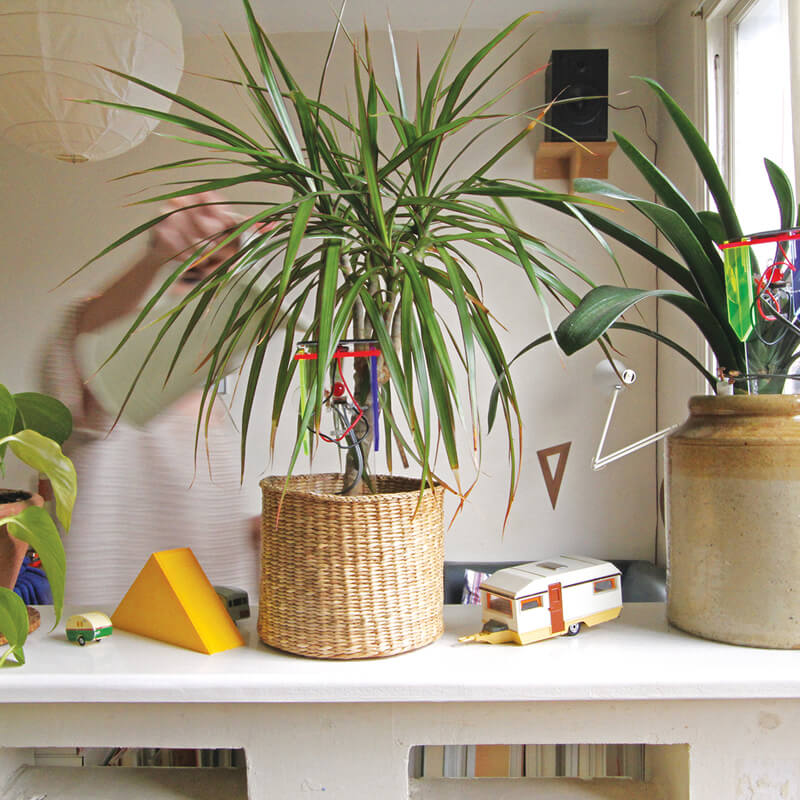 Thirsty Plant kit