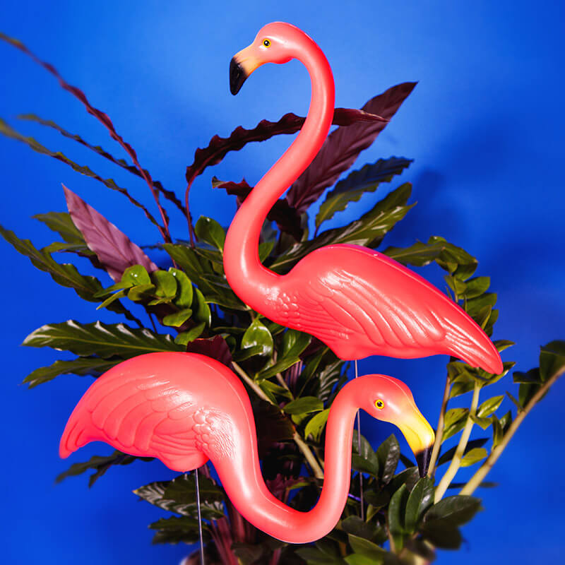 Garden Flamingos Buy from Prezzyboxcom