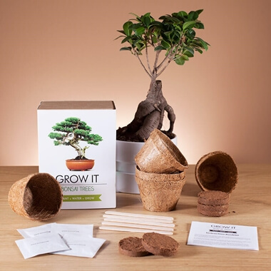 Grow it - Bonsai Tree