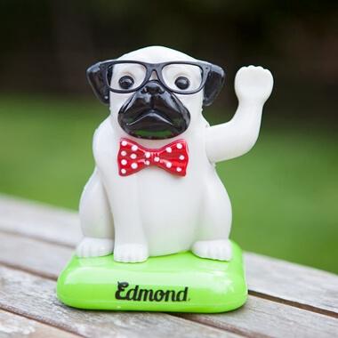 Edmond The Solar Pug