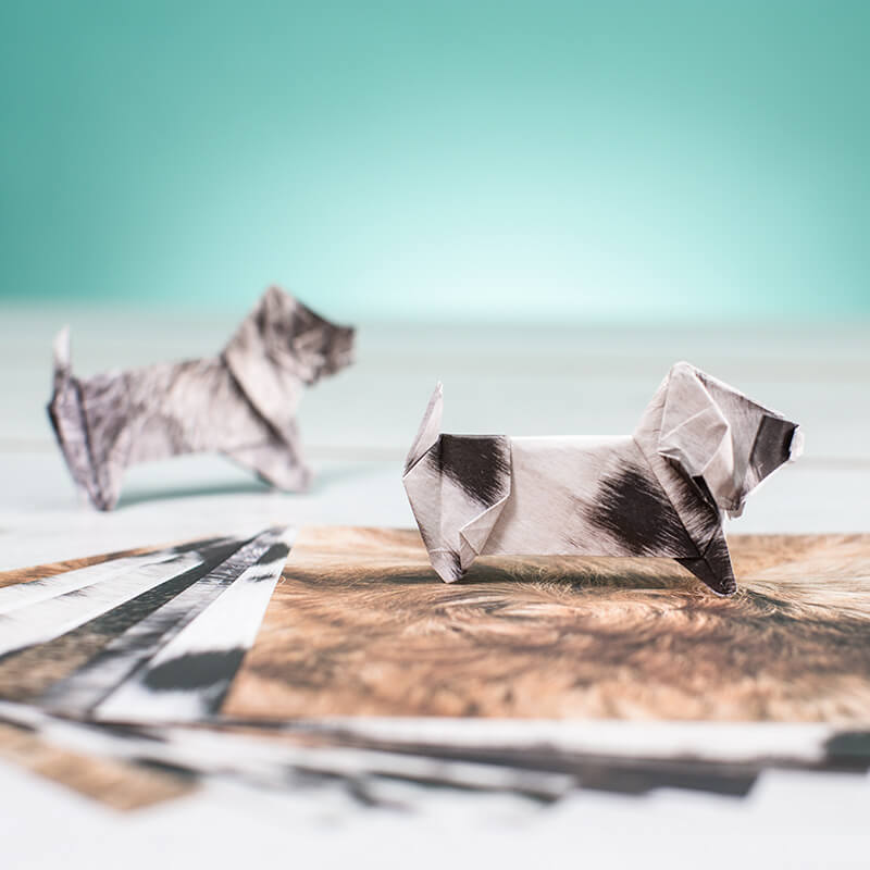 Cat And Dog Origami