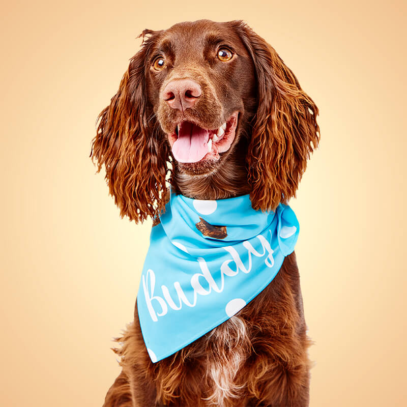 Personalised Photo Dog Bandana