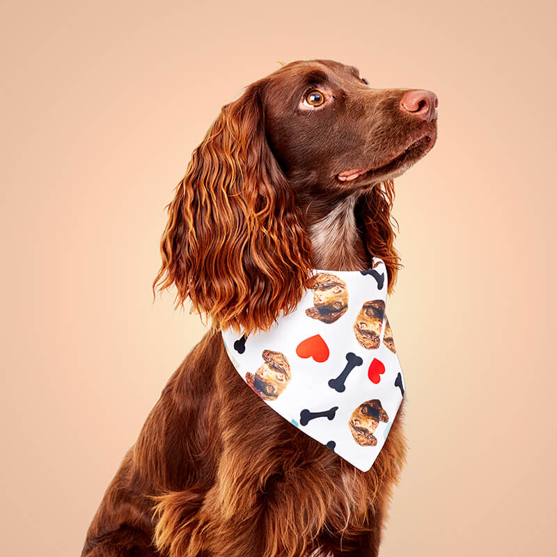 Personalised Photo Heart Dog Bandana