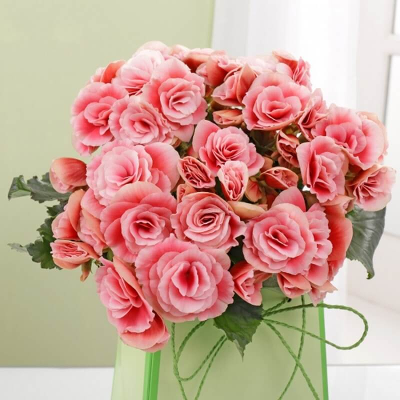 Personalised Pink Begonia Bouquet in Gift Bag