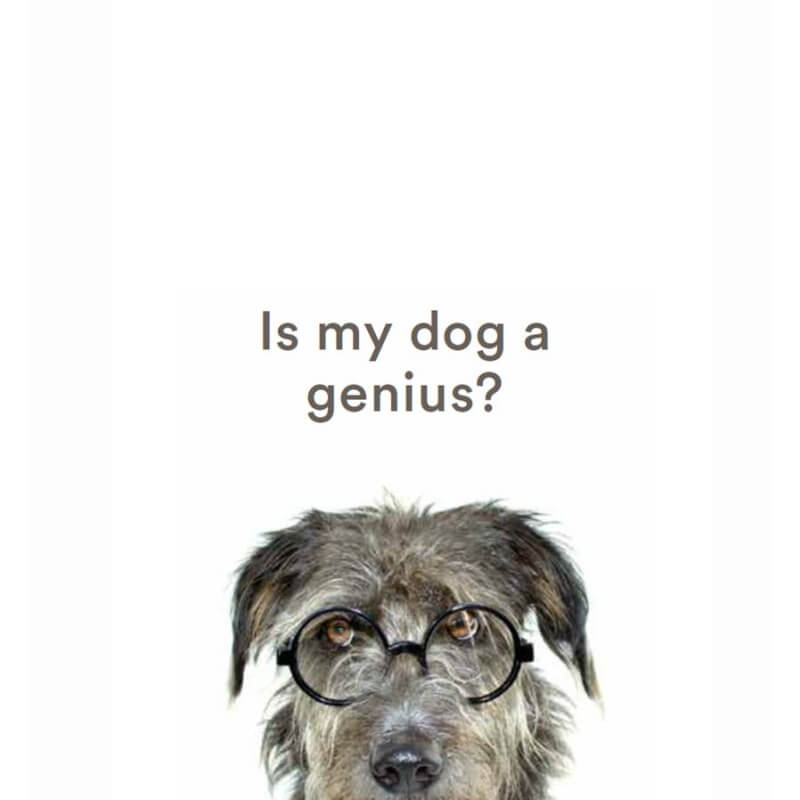 Is My Dog A Genius?