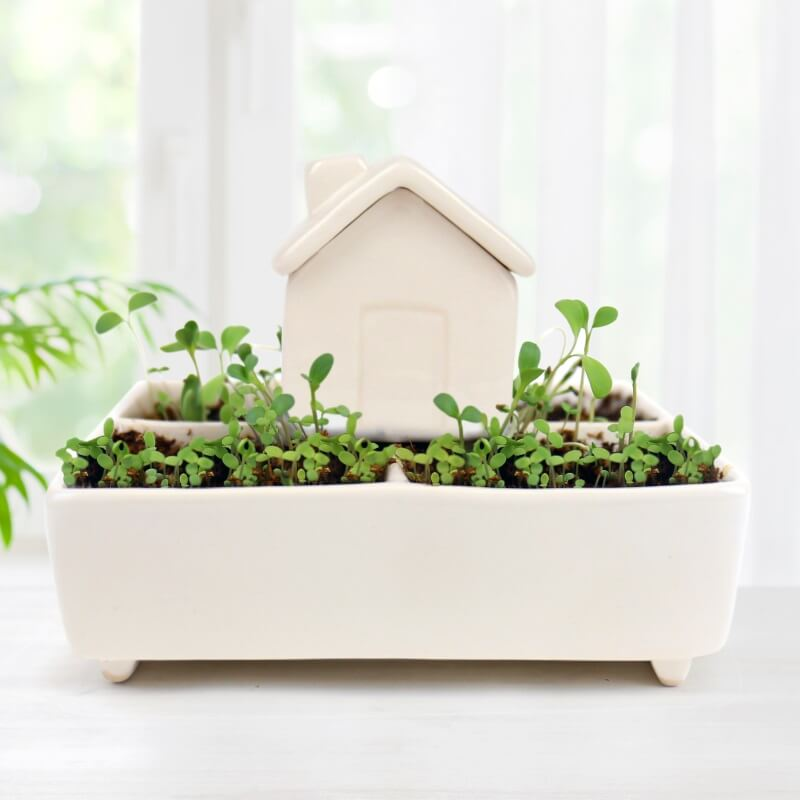 Grow Kit - Self Watering Herb House