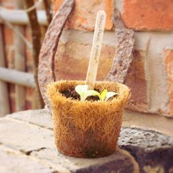 Grow Your Own Chocolate Scented Flowers